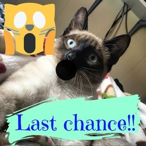 Other - Last chance!